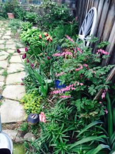 Spring in the Garden 2015
