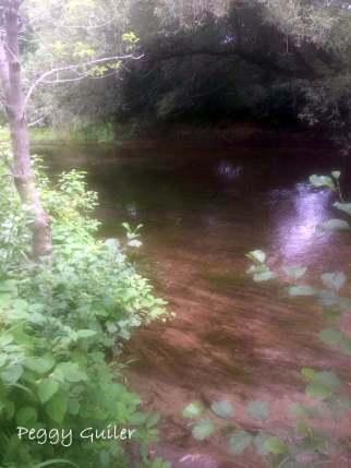 Lynn River on a summer morning